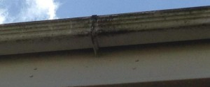 Gutter Cleaning - Gutter Repair & Gutter Replacement.
